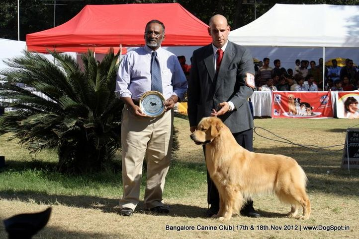ex-176,golden retriever,sw-69,, PETER PAN DE ARERUNGUA, Golden Retriever, DogSpot.in