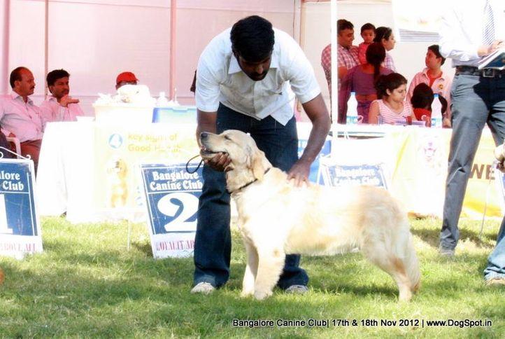 golden retriever,sw-69,, Bangalore Dog Show 2012 , DogSpot.in