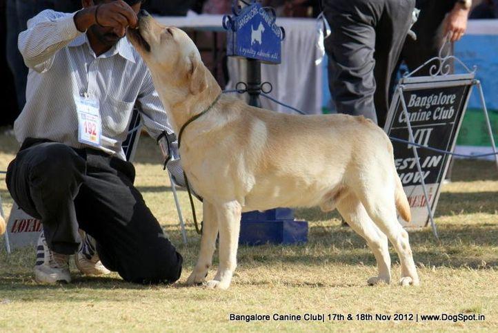 ex-192,labrador retriever,sw-69,, PRAGHATHIS SULTAN, Labrador Retriever, DogSpot.in
