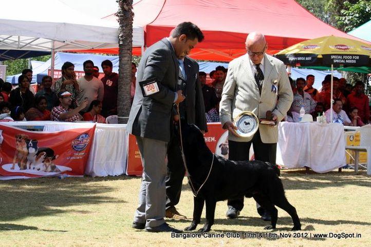 ex-200,labrador retriever,sw-69,, T'JOKER FOR YOU SUN IN THEIR EYES, Labrador Retriever, DogSpot.in