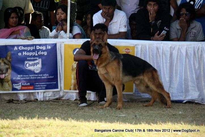 ex-438,german shepherd,sw-69,, ALTIS OF ANGARBERG, German Shepherd Dog, DogSpot.in