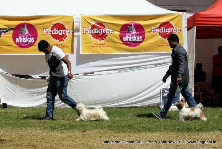 shih tsu,sw-69,, Bangalore Dog Show 2012 , DogSpot.in