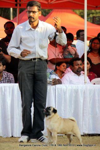 pug,sw-69,, Bangalore Dog Show 2012 , DogSpot.in