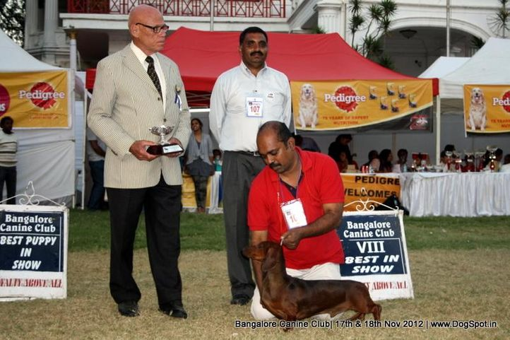 dachshund,ex-101,line up,sw-69,, RAGVIS DAY DREAMER, Dachshund Standard- Smooth Haired, DogSpot.in