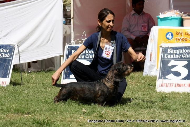 dachshund,ex-122,sw-69,, AM CH RIVENDELL APACHE MOON, Dachshund Standard- Wired Haired, DogSpot.in