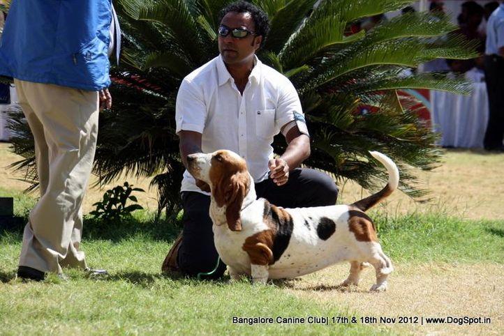 basset hound,ex-70,sw-69,, IND CH WINNIE DOS SETE MOINHOS, Basset Hound, DogSpot.in