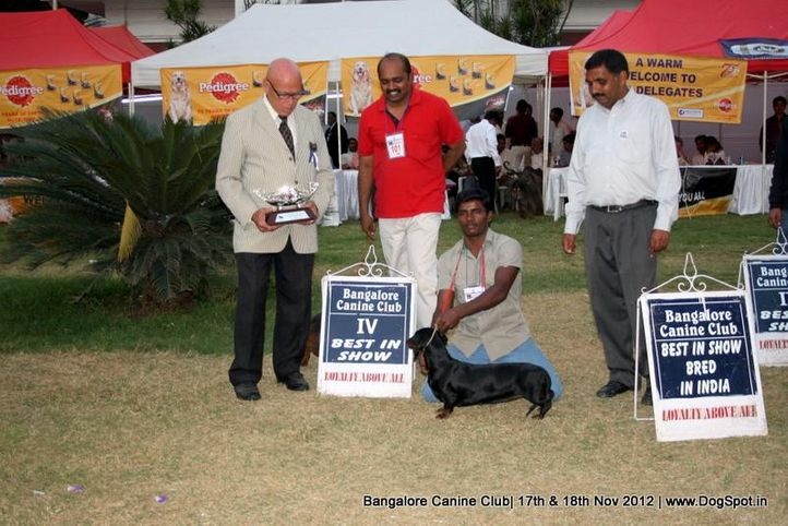 line up,sw-69,dachshund, Bangalore Dog Show 2012 , DogSpot.in