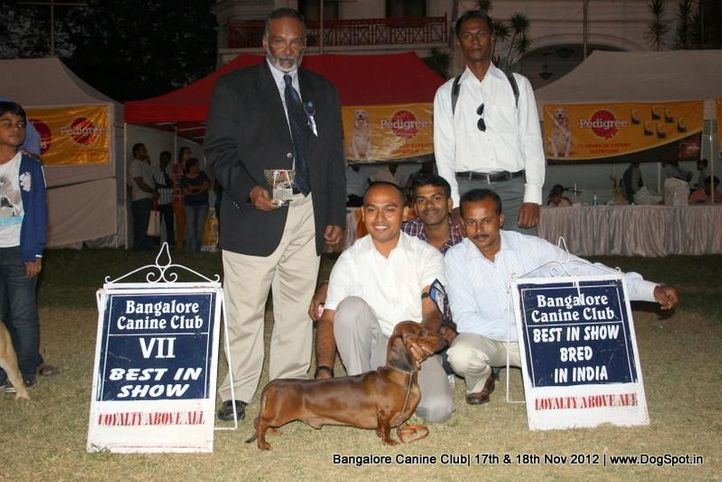 line up,sw-69,, Bangalore Dog Show 2012 , DogSpot.in