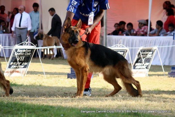 ex-439,german shepherd,sw-69,, ENYO VOM FICHTENSCHLAG, German Shepherd Dog, DogSpot.in