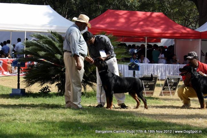 judging,sw-69,, Bangalore Dog Show 2012 , DogSpot.in