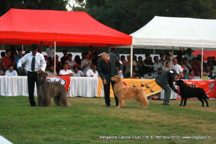 show ground,sw-69,, Bangalore Dog Show 2012 , DogSpot.in