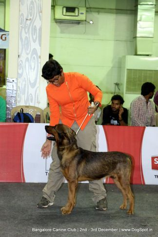child handler,sw-202,, Bangalore Dog Show 2017, DogSpot.in