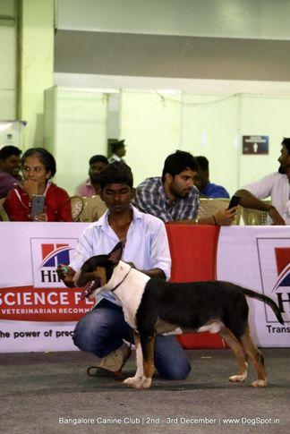 child handler,sw-202,, Bangalore Dog Show 2017, DogSpot.in