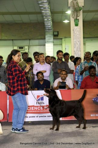 lady handler,sw-202,, Bangalore Dog Show 2017, DogSpot.in