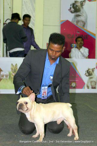 ex-475,french bulldog,sw-202,, Bangalore Dog Show 2017, DogSpot.in