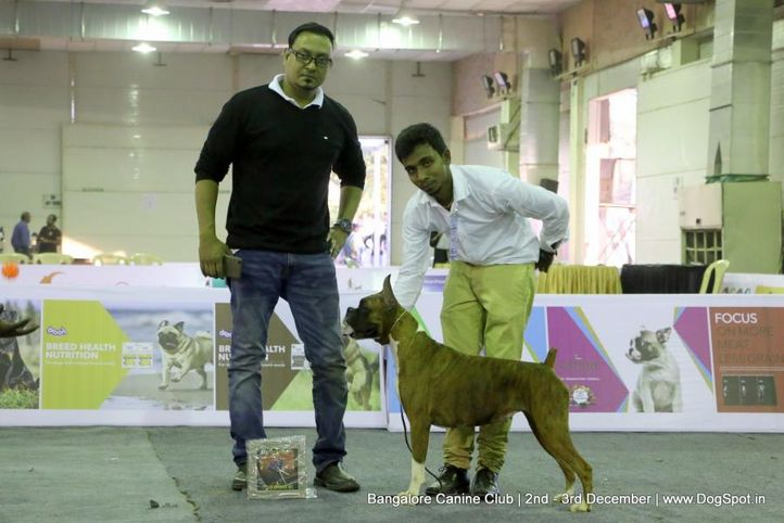boxer,sw-202,, Bangalore Dog Show 2017, DogSpot.in