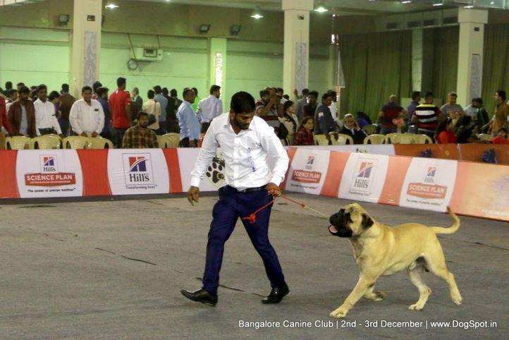 bullmastiff,sw-202,, Bangalore Dog Show 2017, DogSpot.in