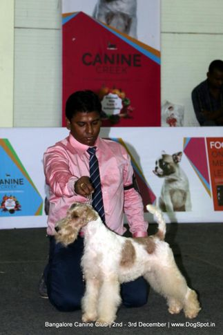 ex-283,fox terrier wire,sw-202,, Bangalore Dog Show 2017, DogSpot.in