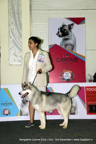 sw-202,, Bangalore Dog Show 2017, DogSpot.in