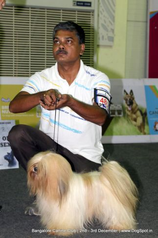 lhasa apso,sw-202,, Bangalore Dog Show 2017, DogSpot.in