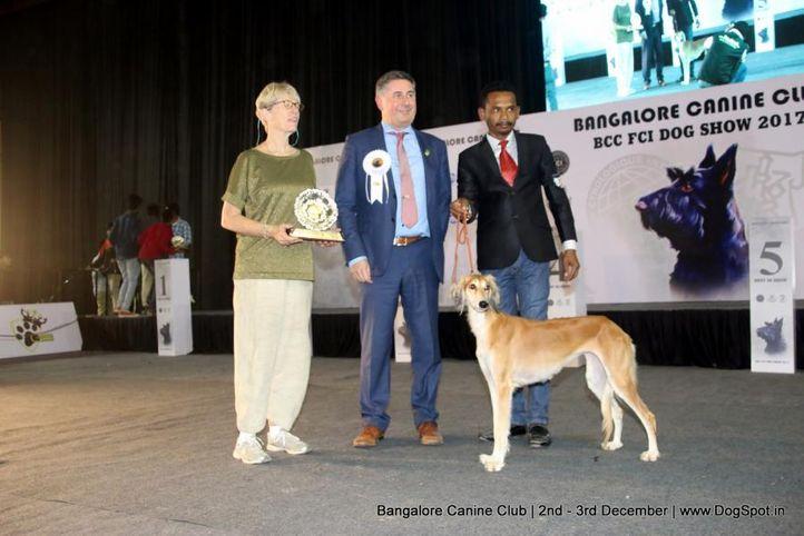 saluki,sw-202,, Bangalore Dog Show 2017, DogSpot.in