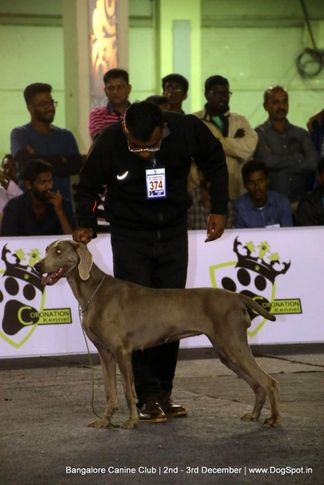 sw-202,weimarner,, Bangalore Dog Show 2017, DogSpot.in