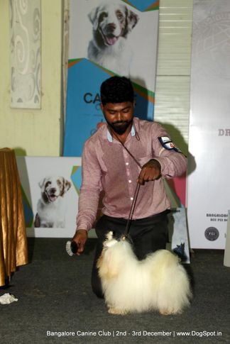maltese,sw-202,, Bangalore Dog Show 2017, DogSpot.in