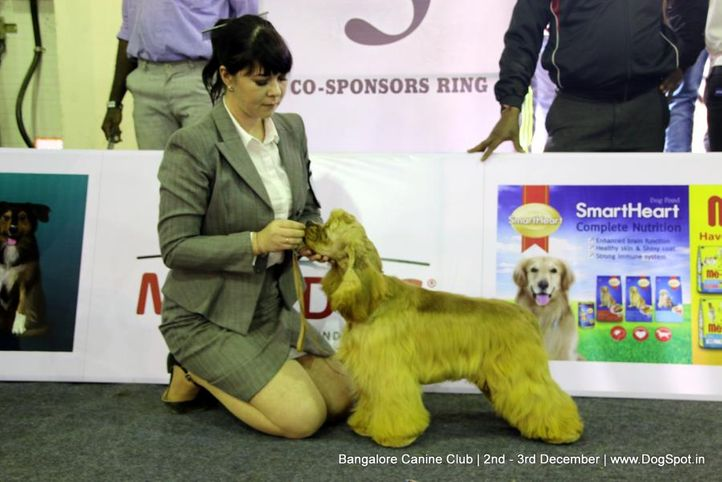 cocker,sw-202,, Bangalore Dog Show 2017, DogSpot.in