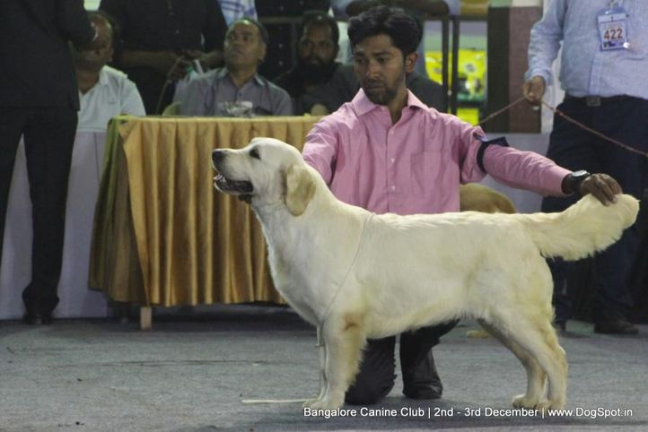 golden retriever,sw-202,, Bangalore Dog Show 2017, DogSpot.in