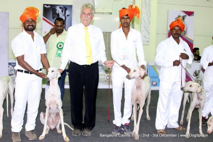 indian breeds,mudhol hound,sw-202,, Bangalore Dog Show 2017, DogSpot.in