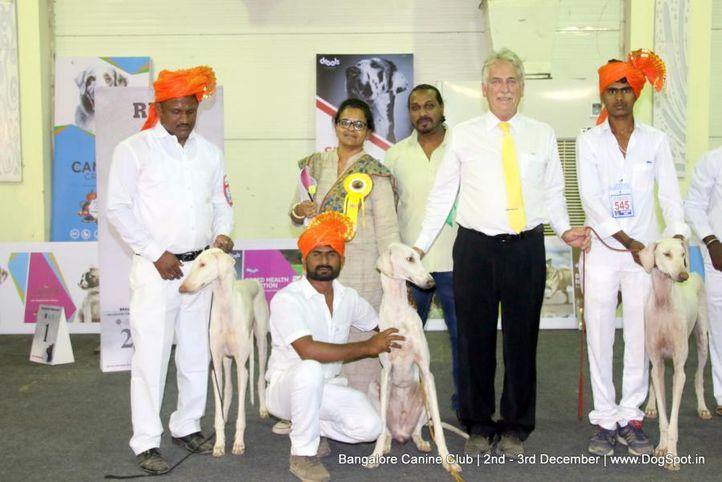 indian breeds,mudhol hound,sw-202,, Bangalore Dog Show 2017, DogSpot.in