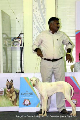 rajapalyam,sw-202,, Bangalore Dog Show 2017, DogSpot.in