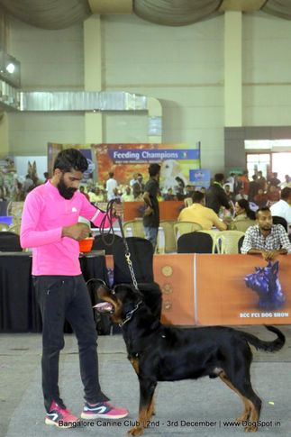rottweiler,sw-202,, Bangalore Dog Show 2017, DogSpot.in