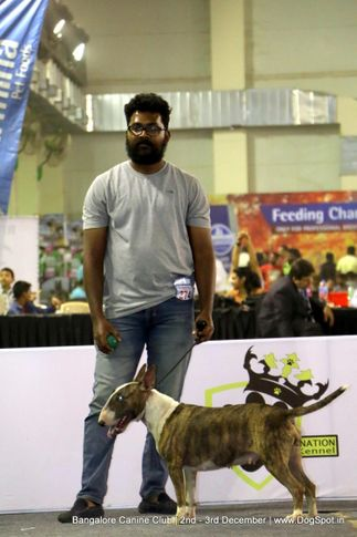 sw-202,terriers,, Bangalore Dog Show 2017, DogSpot.in
