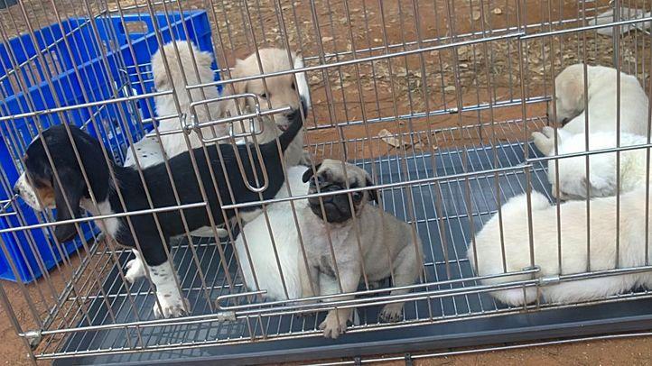bangalore dog show photos, Bangalore dog show photos, DogSpot.in