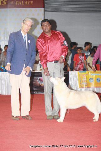 ex-331,siberian husky,sw-102,, Bangalore Dog Show , DogSpot.in