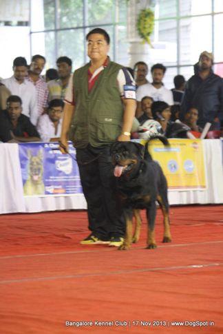 ex-298,rottweiler,sw-102,, SANYADOR'S JERANAMO JAZZ, Rottweiler, DogSpot.in
