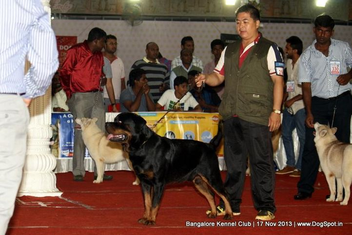 ex-296,rottweiler,sw-102,, Bangalore Dog Show , DogSpot.in