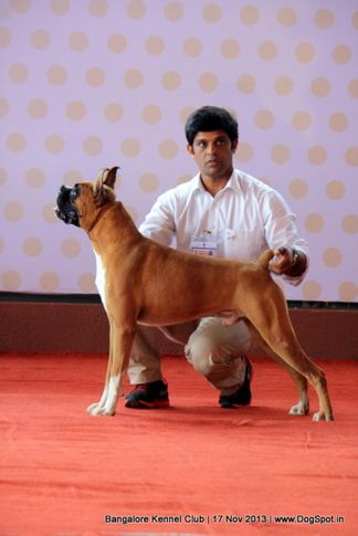 boxer,ex-188,sw-102,, HIGH FLYERS SIZZILING SUMMER, Boxer, DogSpot.in