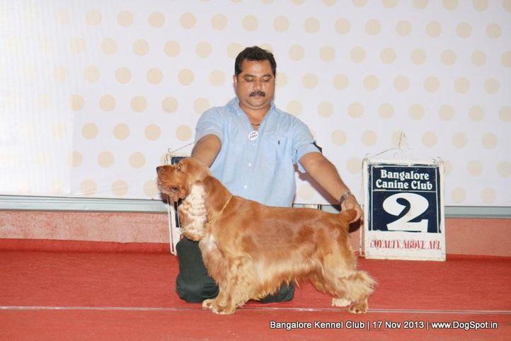 cocker spaniel,sw-102,, Bangalore Dog Show , DogSpot.in