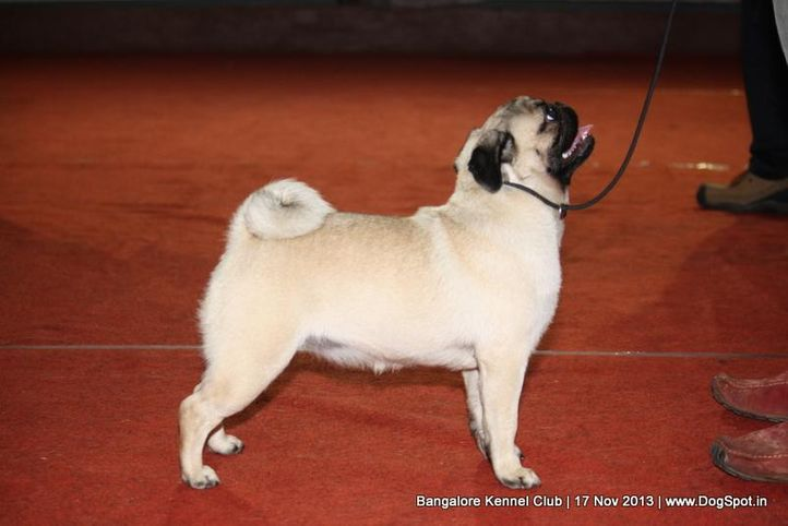 ex-18,pug,sw-102,, LYDIAN'S KEEP YOUR CHIN UP, Pug, DogSpot.in
