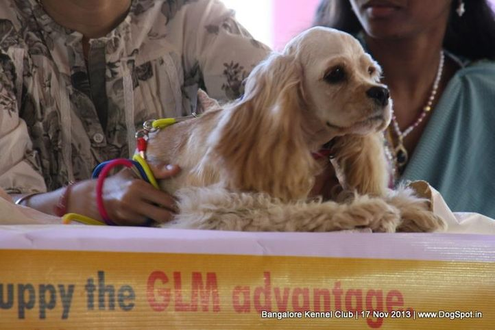 people,sw-102,, Bangalore Dog Show , DogSpot.in