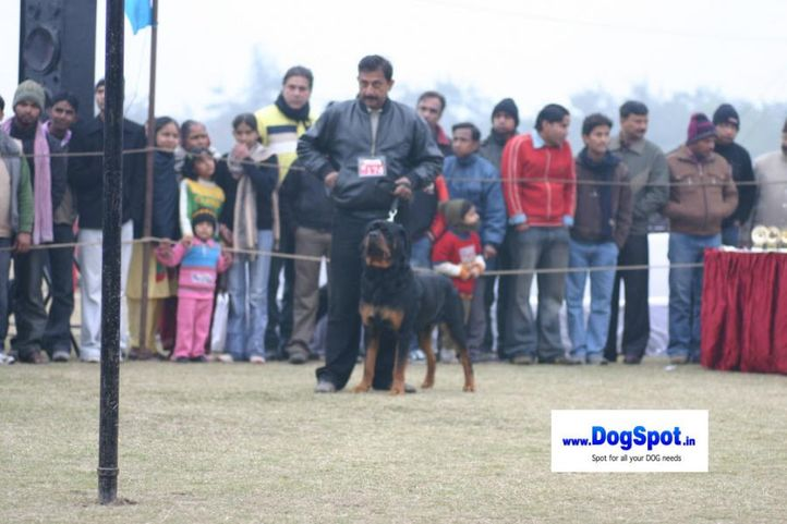Rott,, Bareilly Dog Show 2010, DogSpot.in