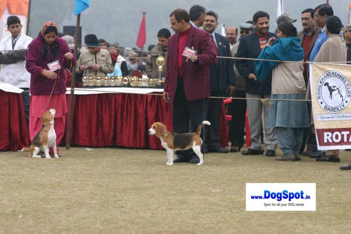 beagle,, Bareilly Dog Show 2010, DogSpot.in
