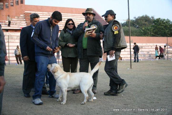 sw-14, best bi,ex-104,lineup,, SKYLARK OF LAYLAND, Labrador Retriever, DogSpot.in