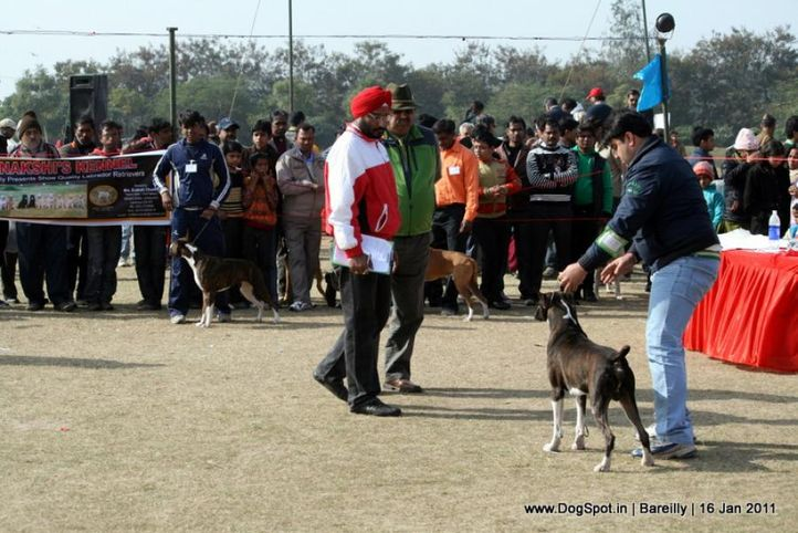 sw-14, boxer,ex-119,ground,judging,, CH. ALEX CHACE OF LUBOX, Boxer, DogSpot.in