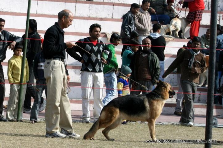 sw-14, ex-186,gsd,, DHEERS STARYAR STYLISH GIRL, German Shepherd Dog, DogSpot.in