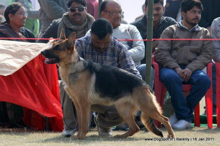 sw-14, ex-188,gsd,, LAMBA'S CHAMELI, German Shepherd Dog, DogSpot.in