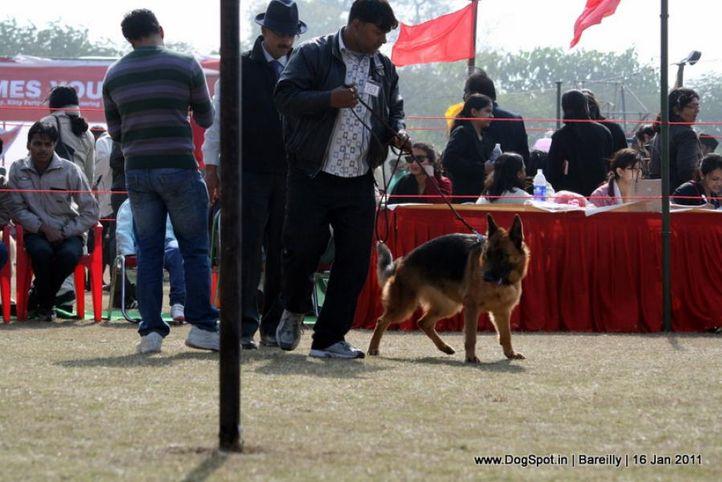 sw-14, ex-189,gsd,, ROHITASUE'S BHOLI, German Shepherd Dog, DogSpot.in