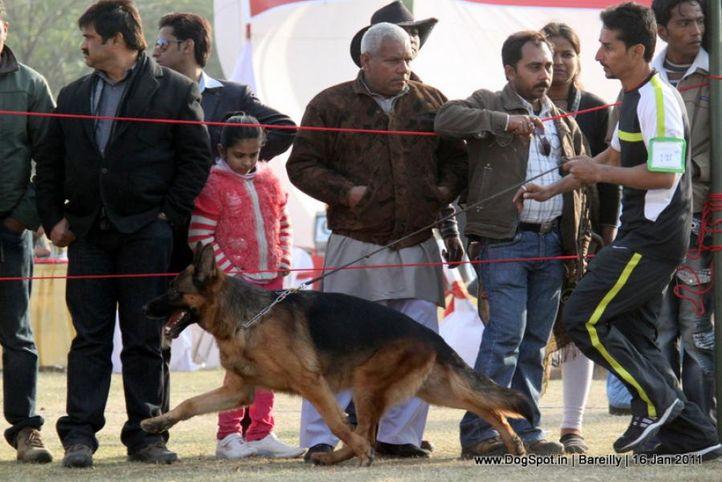 sw-14, ex-199,gsd,, YAKO VON NOORT, German Shepherd Dog, DogSpot.in
